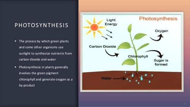 PHOTOSYNTHESIS 3  The process by which green plants and some other organisms use sunlight to synthesize nutrients from ca...