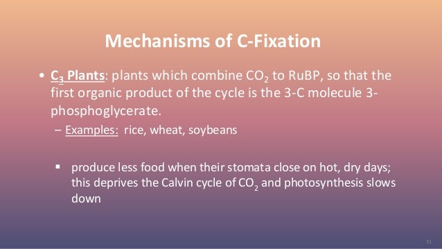 31 Mechanisms of C-Fixation • C3 Plants: plants which combine CO2 to RuBP, so that the first organic product of the cycle ...
