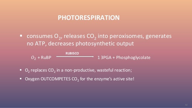 32 PHOTORESPIRATION  consumes O2, releases CO2 into peroxisomes, generates no ATP, decreases photosynthetic output 𝑂2 + R...