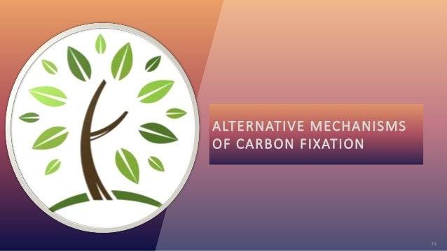 34 ALTERNATIVE MECHANISMS OF CARBON FIXATION