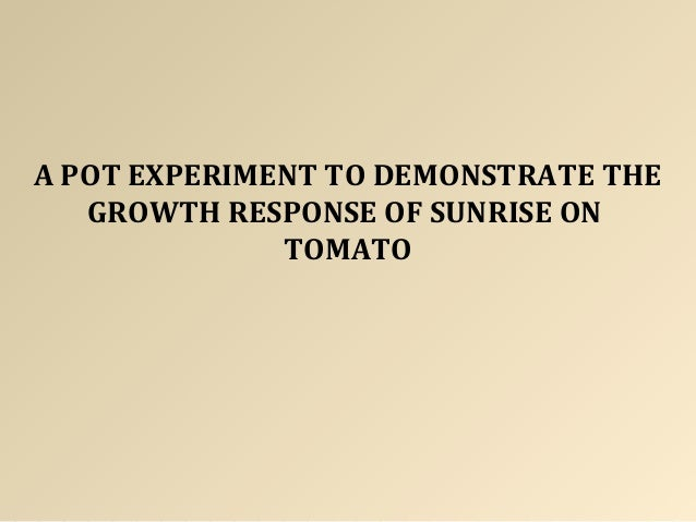 A POT EXPERIMENT TO DEMONSTRATE THE GROWTH RESPONSE OF SUNRISE ON TOMATO