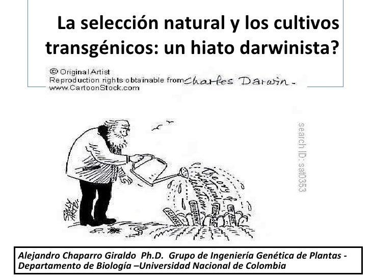 La selección natural y los cultivos transgénicos: un hiato darwinista? Alejandro Chaparro Giraldo  Ph.D.  Grupo de Ingenie...