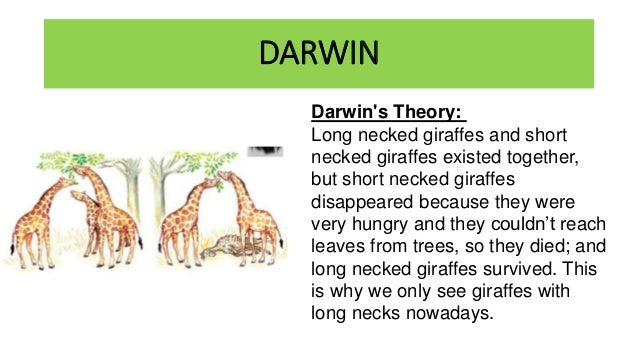 Image result for darwin theory giraffe