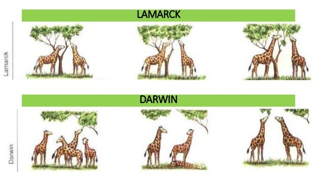 Darwin S Theory Vs Natural Selection