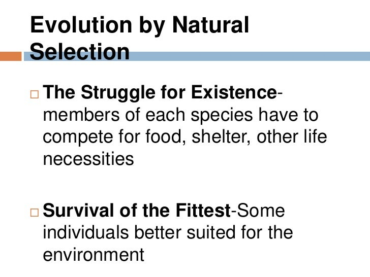 an examination of darwins theory of survival for the fittest What was darwins theory of but i know that the survival of the fittest amd the theory of natual that needn't mean it's the fittest when it comes to survival.