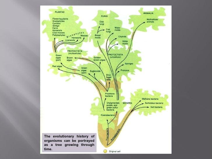 Darwin's theory of evolution Slide 3