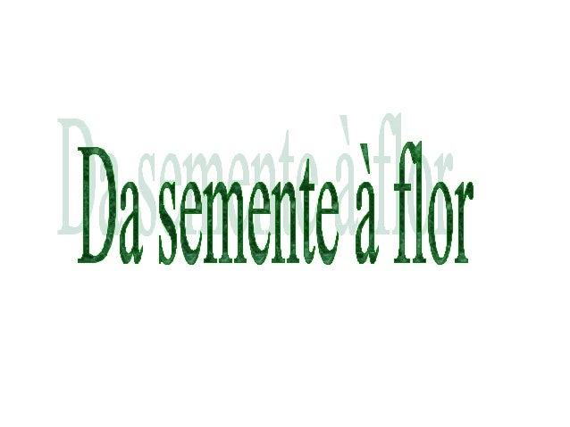 A flor é uma parte das plantas,tem cores vivas e desenvolve-seespecialmente na Primavera.