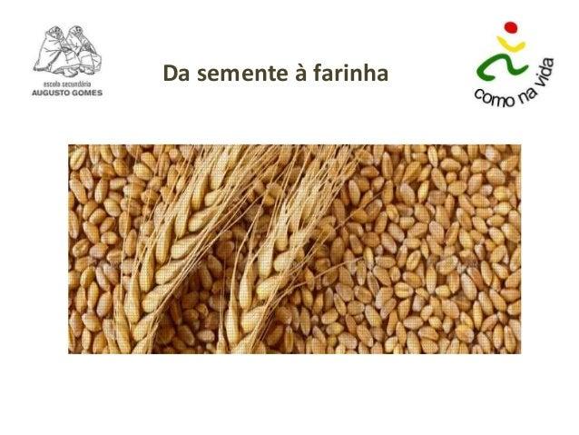 Da semente à farinha