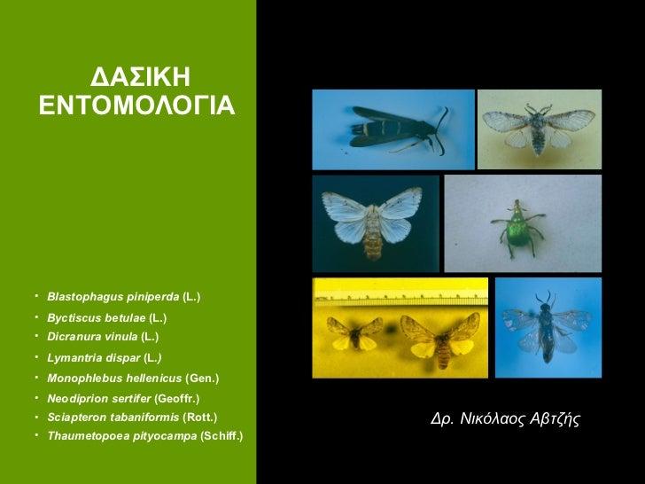 ΔΑΣΙΚΗ ΕΝΤΟΜΟΛΟΓΙΑ   Δρ. Νικόλαος Αβτζής <ul><li>Blastophagus piniperda  (L.) </li></ul><ul><li>Byctiscus betulae  (L.) </...