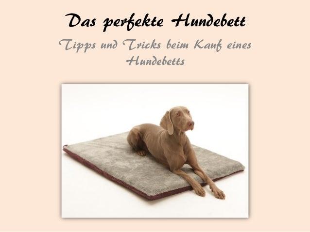 Das perfekte Hundebett Tipps und Tricks beim Kauf eines Hundebetts