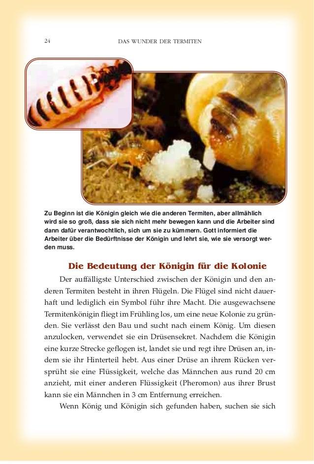 Erfreut Anatomie Von Termiten Fotos - Anatomie Ideen - finotti.info