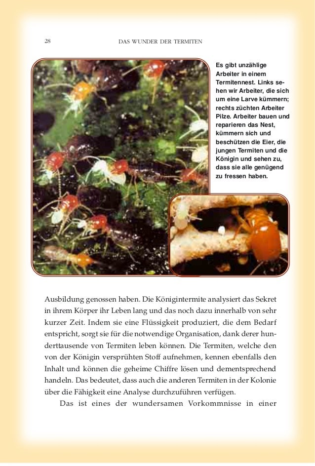 Das wunder der termiten. german deutsche
