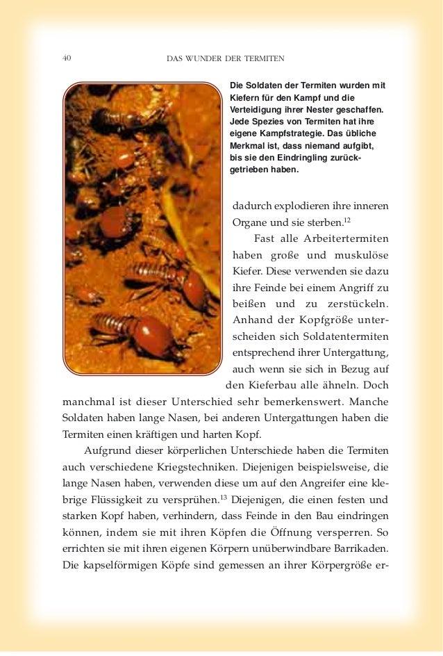 Fein Anatomie Von Termiten Bilder - Anatomie Von Menschlichen ...