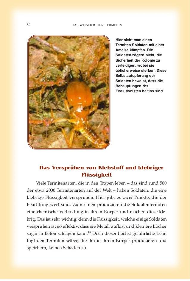 Wunderbar Anatomie Der Ameisen Ideen - Anatomie Von Menschlichen ...
