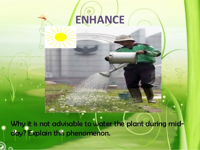 ENHANCE Why it is not advisable to water the plant during mid- day? Explain this phenomenon.