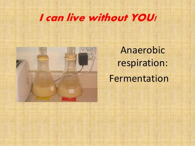 Anaerobic respiration: Fermentation I can live without YOU!