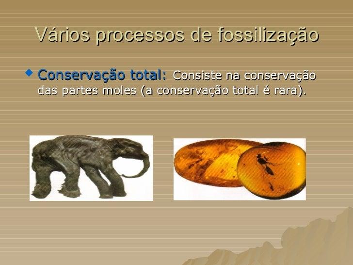 Vários processos de fossilização <ul><li>Conservação total:   Consiste na conservação das partes moles (a conservação tota...