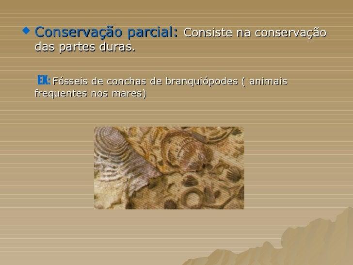 <ul><li>Conservação parcial:  Consiste na conservação das partes duras. </li></ul><ul><li>EX:   Fósseis de conchas de bran...