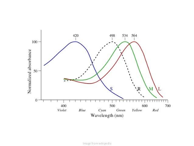 Data Viz CE 2014 Vision and the Brain