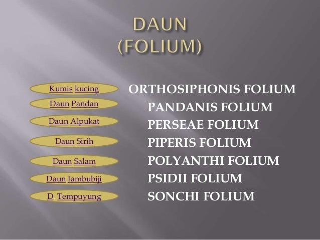 Daun pptx Slide 2