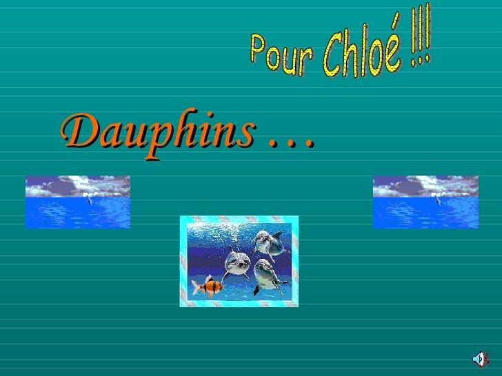 Dauphins … Pour Chloé !!!