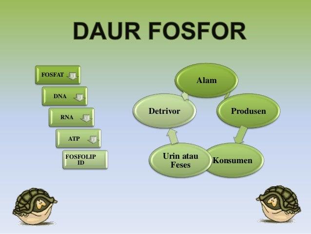 Daur Fosfor