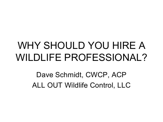 WHY SHOULD YOU HIRE AWILDLIFE PROFESSIONAL?   Dave Schmidt, CWCP, ACP  ALL OUT Wildlife Control, LLC