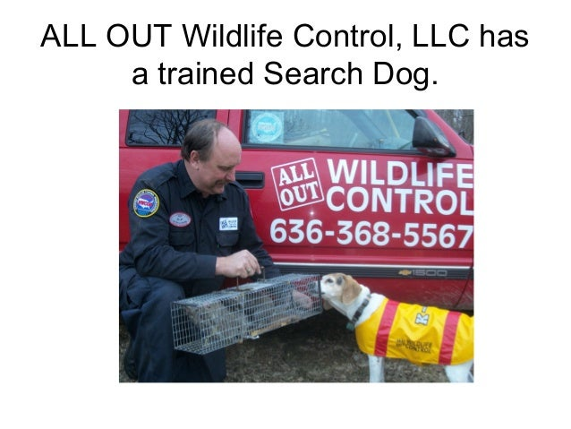 ALL OUT Wildlife Control, LLC has     a trained Search Dog.