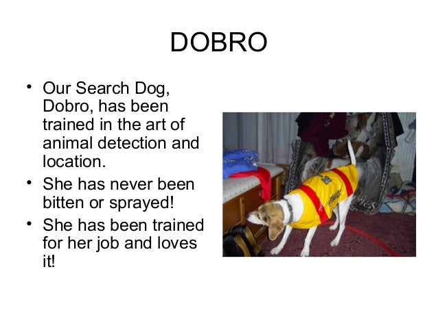 DOBRO• Our Search Dog,  Dobro, has been  trained in the art of  animal detection and  location.• She has never been  bitte...