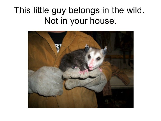 This little guy belongs in the wild.          Not in your house.