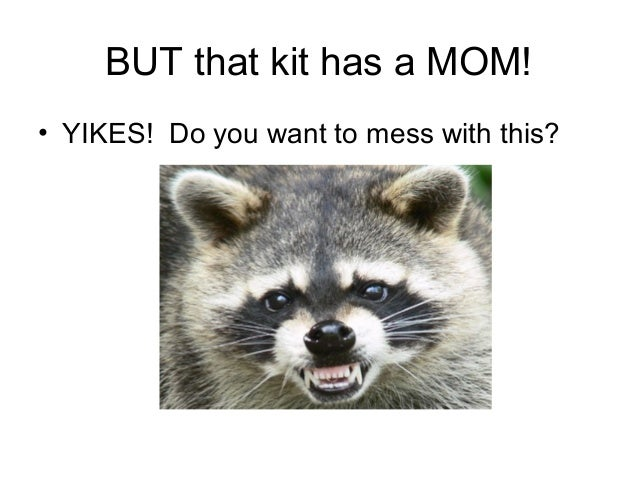 BUT that kit has a MOM!• YIKES! Do you want to mess with this?