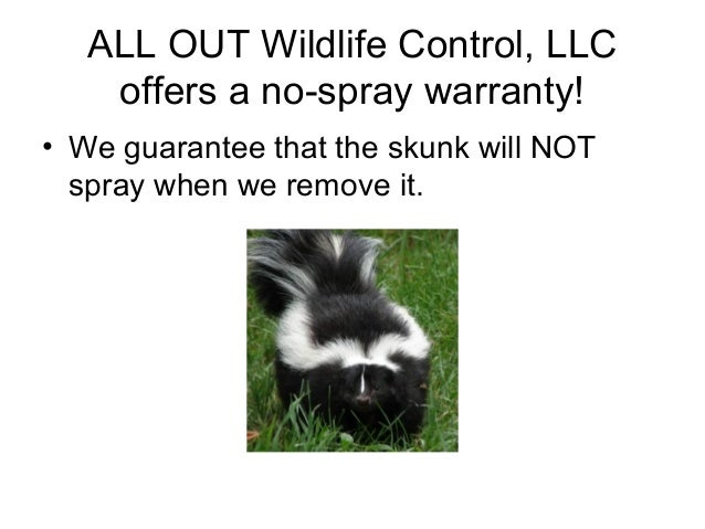 ALL OUT Wildlife Control, LLC    offers a no-spray warranty!• We guarantee that the skunk will NOT  spray when we remove it.