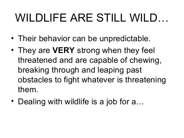 WILDLIFE ARE STILL WILD…• Their behavior can be unpredictable.• They are VERY strong when they feel  threatened and are ca...