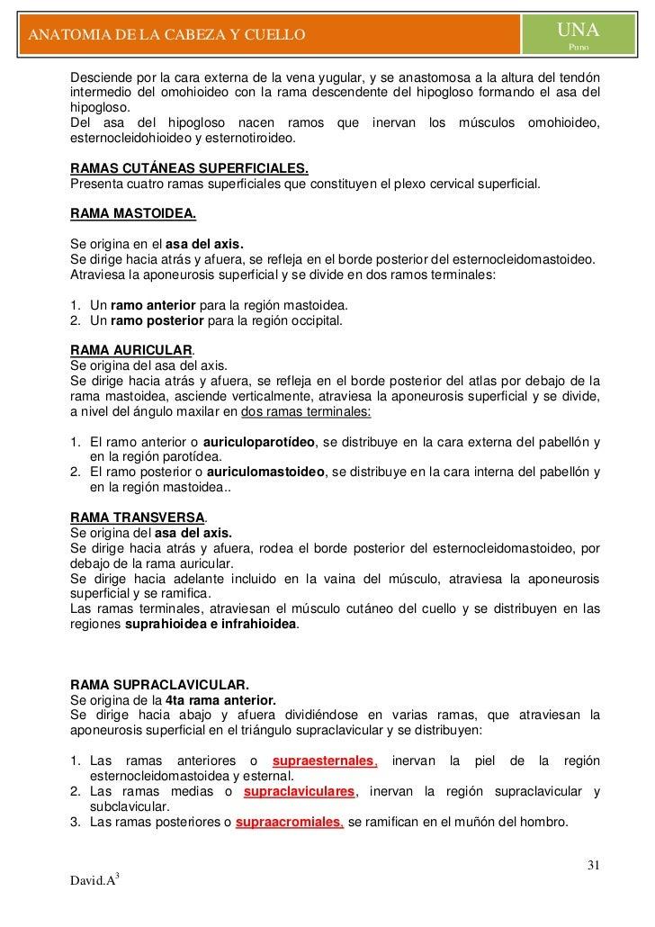 Perfecto Nervios En Diagrama De Cuello Y El Hombro Bandera ...