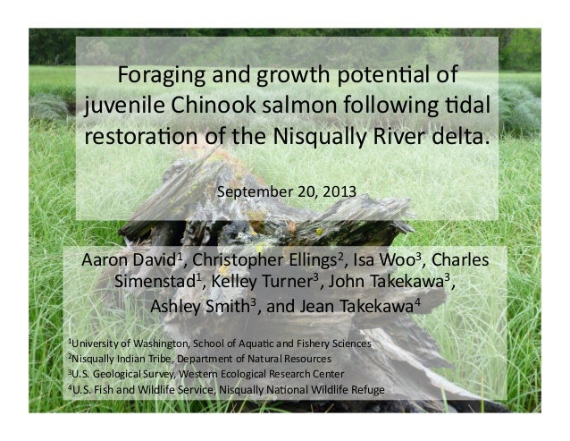 Foraging  and  growth  poten/al  of   juvenile  Chinook  salmon  following  /dal   restora/on  of  ...