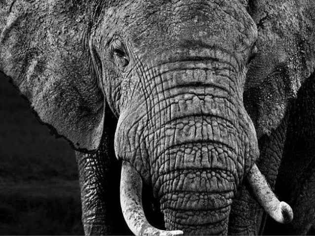 end cast David Yarrow Photography images credit www. Music James Newton Howard created olga e. thanks for watching