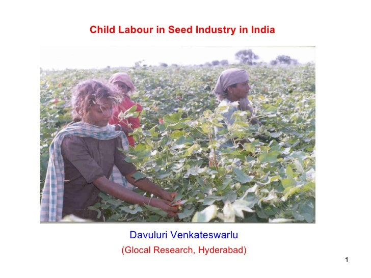 Child Labour in Seed Industry in India Davuluri Venkateswarlu (Glocal Research, Hyderabad)