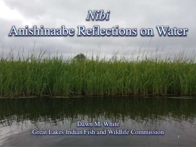 Nibi Anishinaabe Reflections on Water Dawn M. White Great Lakes Indian Fish and Wildlife Commission 1