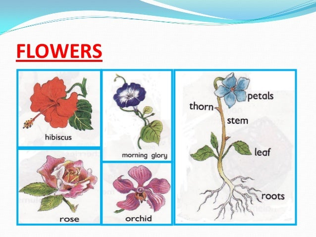 FOREIGN FLOWERS