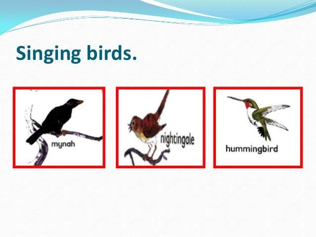 Singing birds.