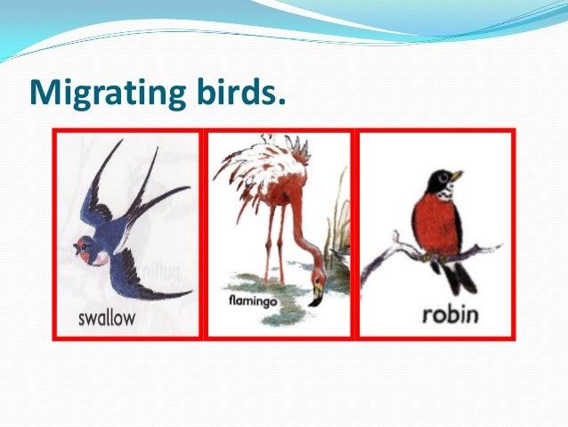 Migrating birds.