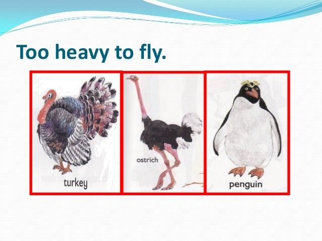 Too heavy to fly.
