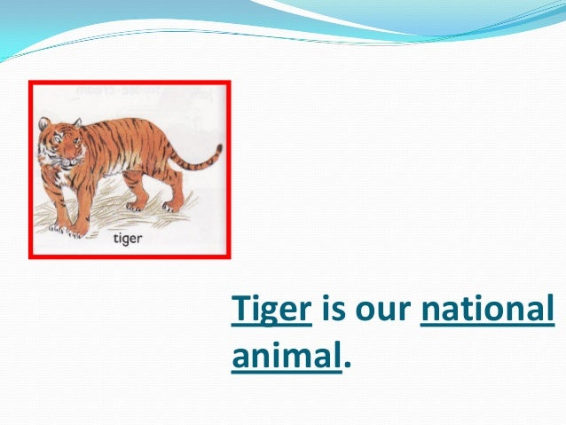 Tiger is our national animal.