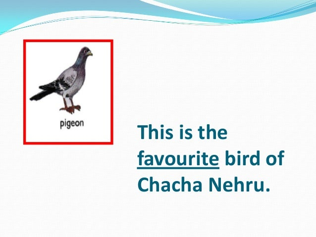 This is the favourite bird of Chacha Nehru.