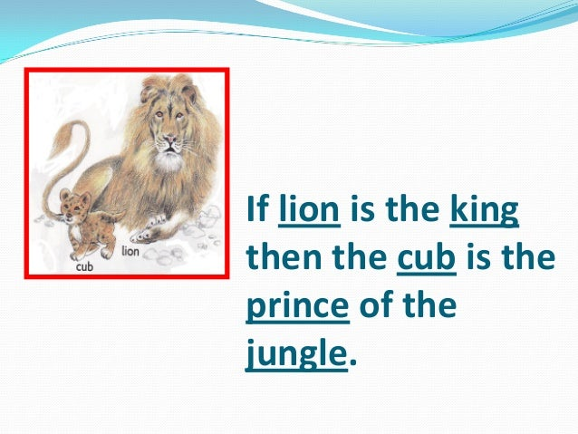 If lion is the king then the cub is the prince of the jungle.