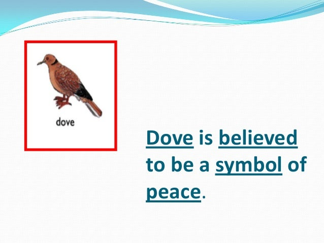 Dove is believed to be a symbol of peace.