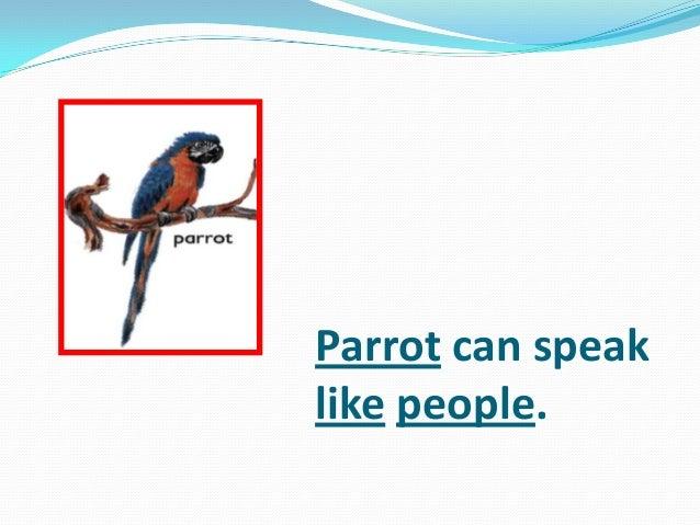 Parrot can speak like people.