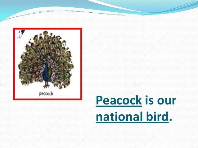 Peacock is our national bird.