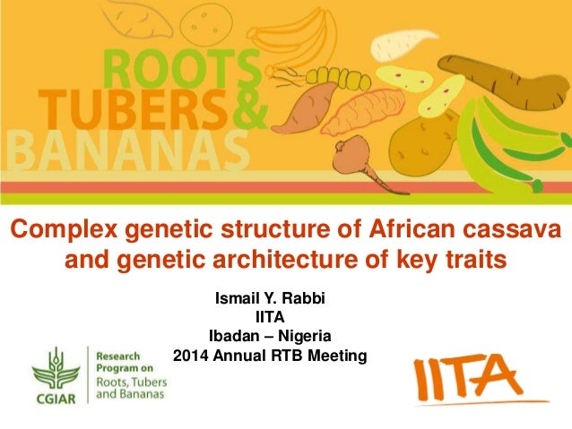 Complex genetic structure of African cassava  and genetic architecture of key traits  Ismail Y. Rabbi  IITA  Ibadan – Nige...