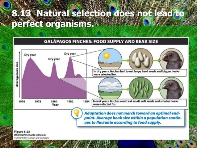 Why Does Natural Selection Not Result In Perfect Organisms